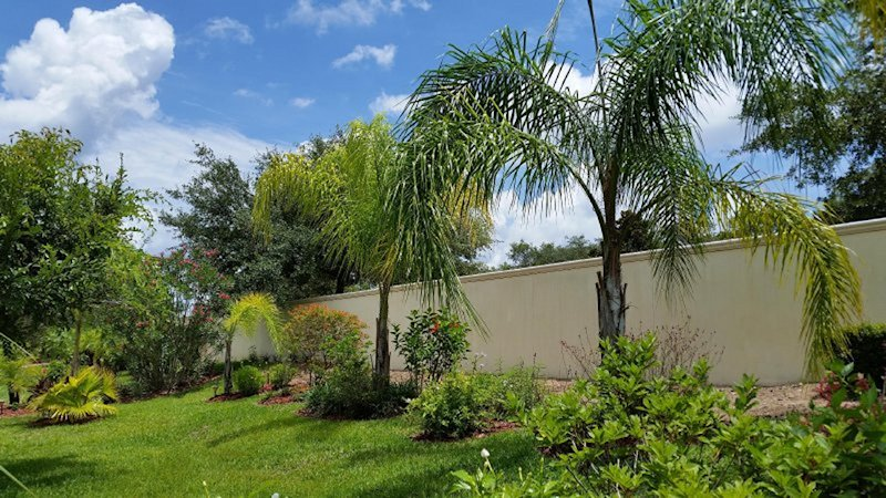 Back garden and palm trees